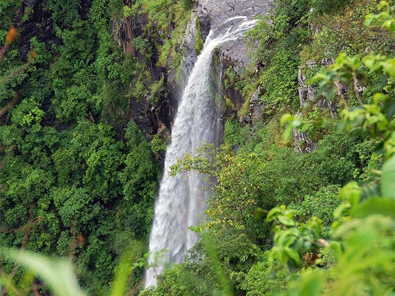 a0d3ae6f25c5aca3c237829ec382cc8c 6 famous wildlife sanctuaries in Odisha