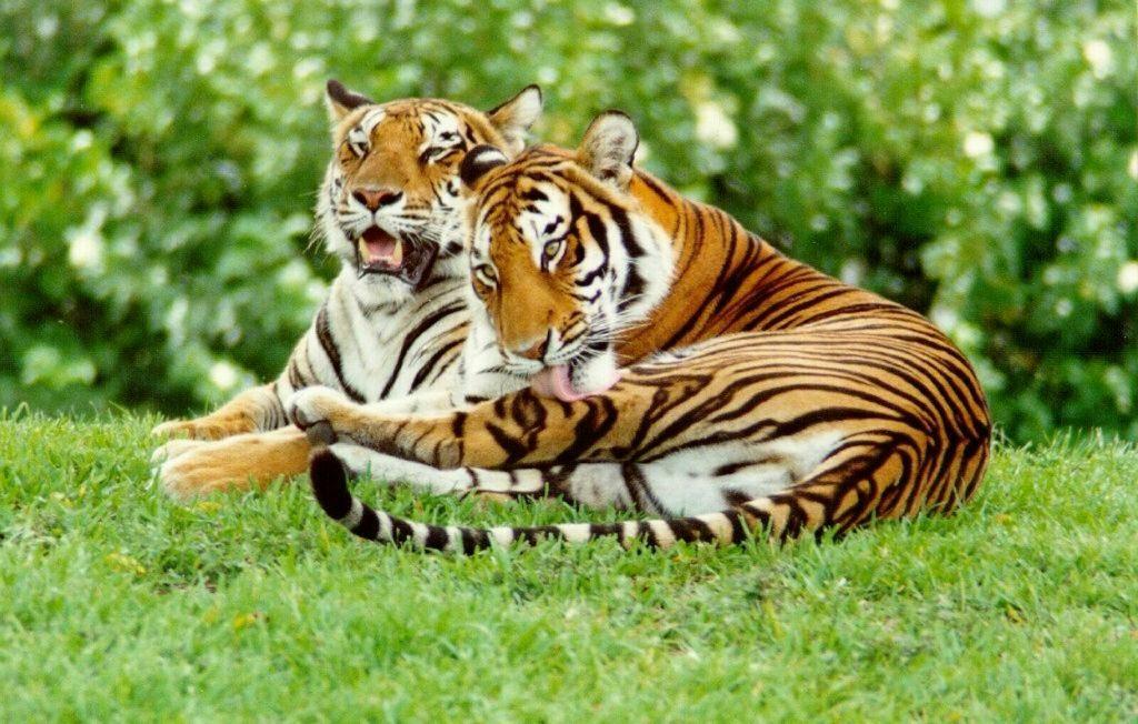 f114335bd848faef7cc04342d618e167 6 famous wildlife sanctuaries in Odisha
