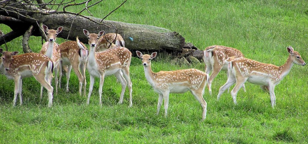 slider img 3 6 famous wildlife sanctuaries in Odisha