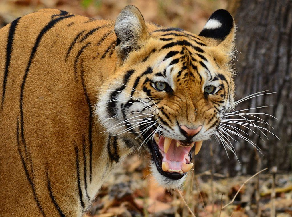 Wildlife sanctuaries in Maharashtra