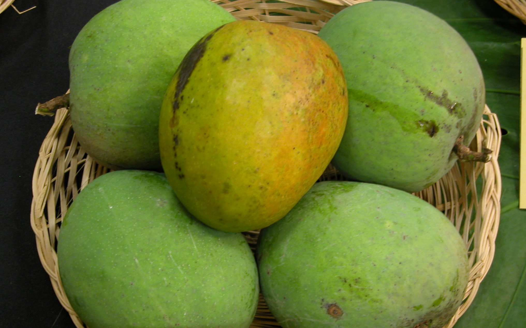 Mango Paheri edited Rich and sweet mangoes of Maharashtra