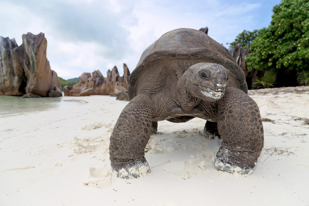 BRANDit, Seychelles Tourism Board