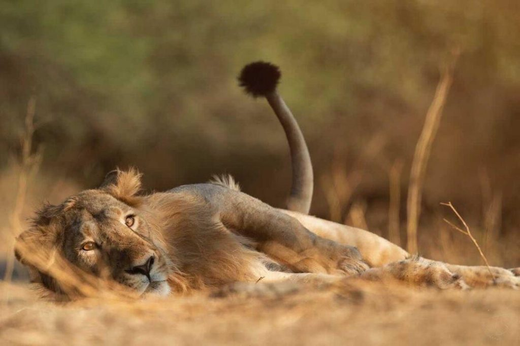 WhatsApp Image 2021 05 29 at 6.09.02 PM 2 Postcard Hotels open 15-room luxury Postcard Gir Wildlife Sanctuary