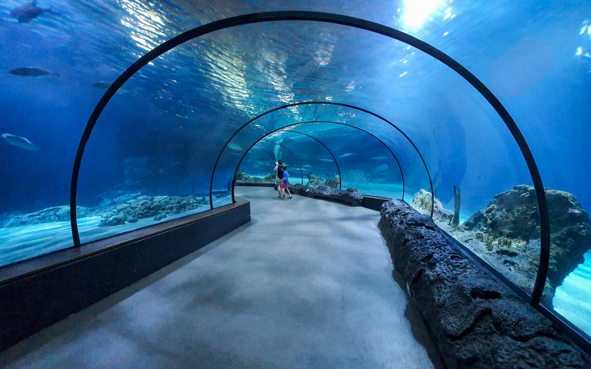 aquarium tunnel 1580137044LzJ edited 7 unexplored places in Chennai to surprise and wow you