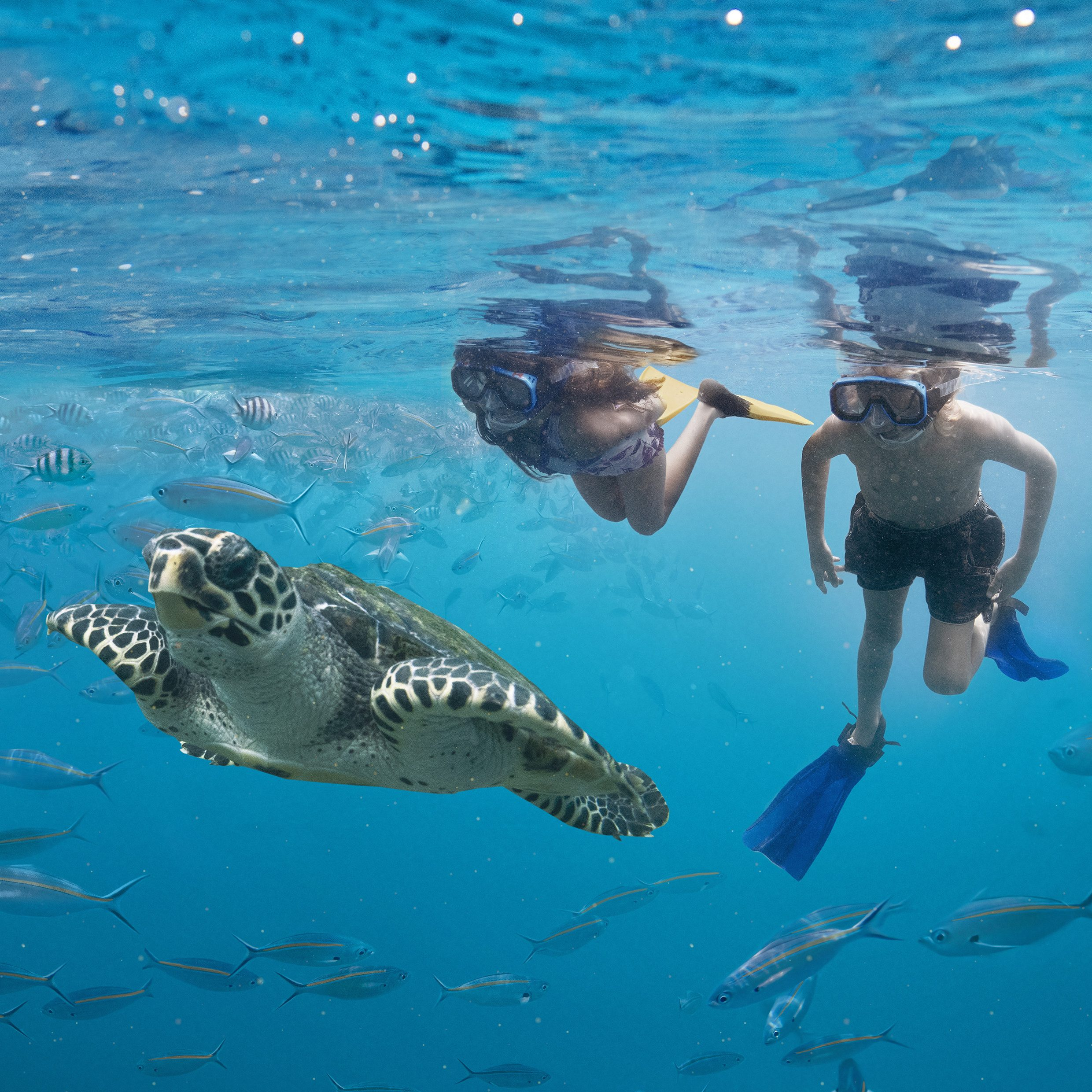 Girl and boy snorkelling and swimming with fish. (Image Credit: Tourism Fiji)