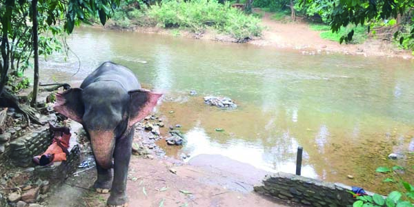 bhagwan mahavir wildlife sanctuary goa tourism entry fee timings holidays reviews header Check out these wonderful 10 places to chill in Goa